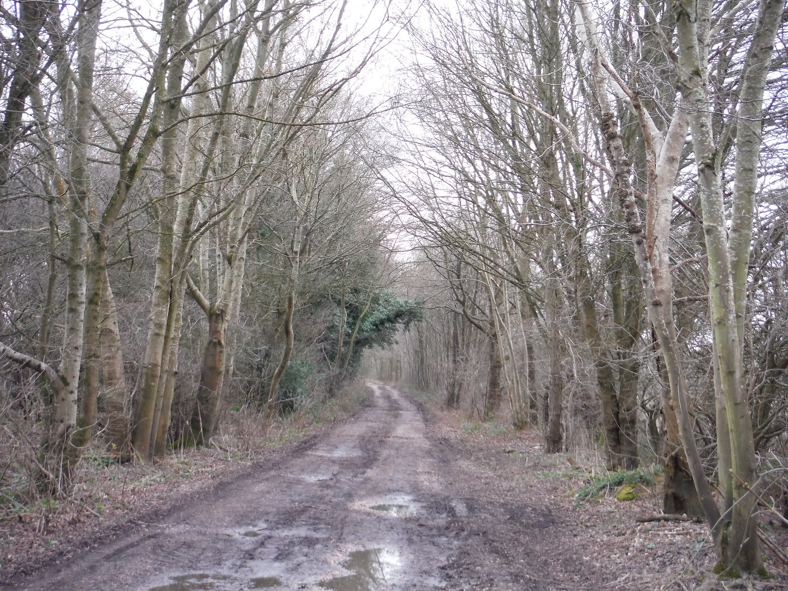 Course of the Wealden Line, SW of Uckfield, near Owlsbury Farm SWC Walk 262 Uckfield to Buxted