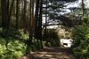 Mt. Davidson - Trail to Dalewood Way