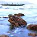 Frog Shape Stone by Honey Clicks