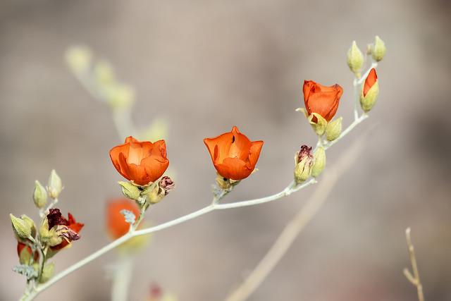 Flower 22_7D2_130316