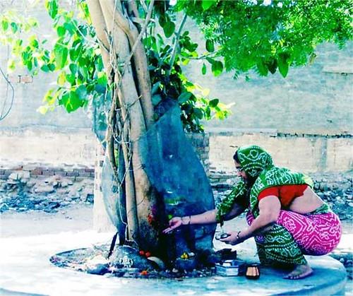 भारतीय संस्कृति में वृक्षों को देवतुल्य माना जाता है
