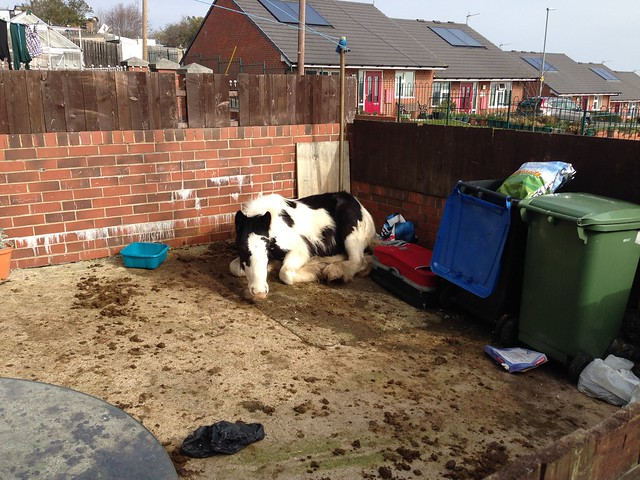 Horse in Easington Colliery