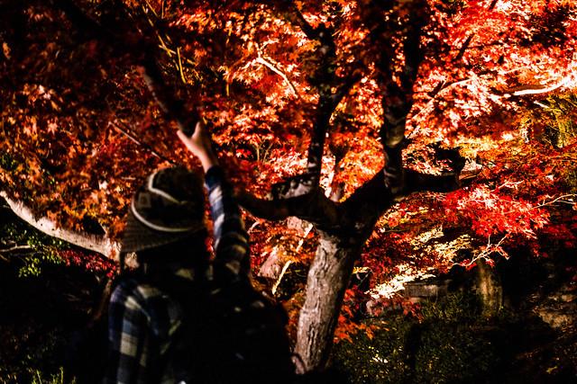 20141122-武奈ヶ岳&京都ライトアップ-0842.jpg