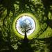 Tree, Pitchcroft by DankSpangle