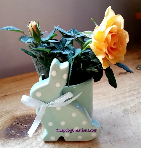 April Showers Bring May Flowers? #rose #roseplant #LapdogCreations ©LapdogCreations