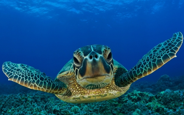 close-up-of-sea-turtle-at-akumal1