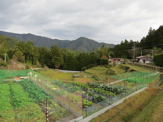 Hosshinmon-oji to Mizunomi-oji