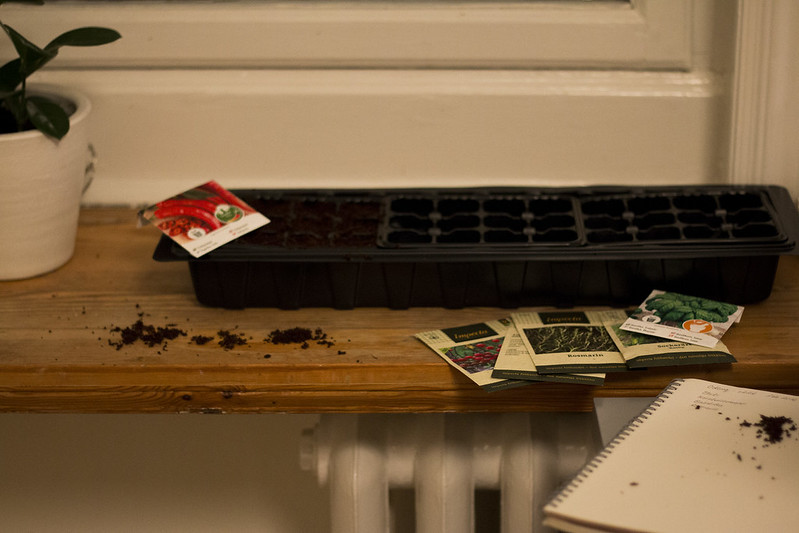 Window seeding