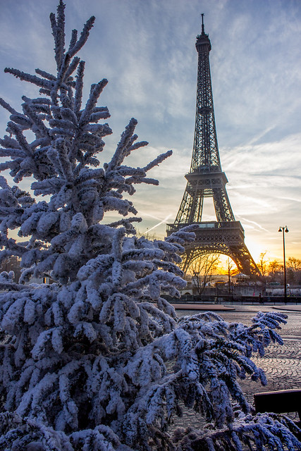 Christmas tree sunrise in front of Eiffel Tower