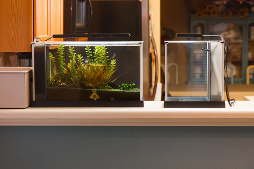 Fluval Spec III and Spec V Aquariums - Front View