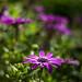 In my garden by annfrau