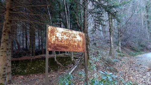 trees forest greece sequoia katerini pieria πιερία κατερίνη σκοτεινά παλιάμόρνα σεκόγια σεκόγιεσ εργοστάσιοξυλείασ πανεπιστήμιοτωνδασών