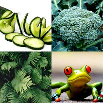 A collage of green things