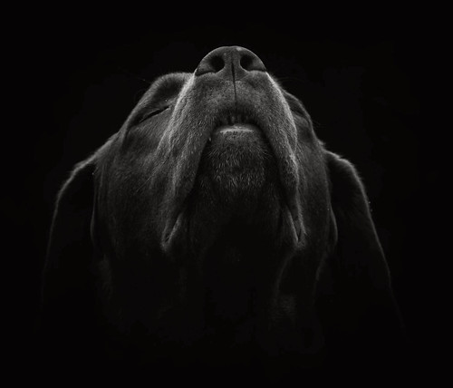 blackandwhite dog animal
