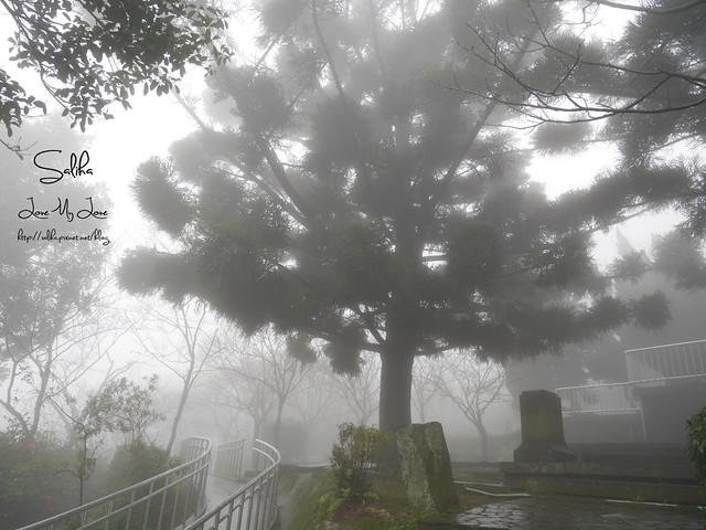 台北一日遊景點陽明山花季賞櫻花 (14)