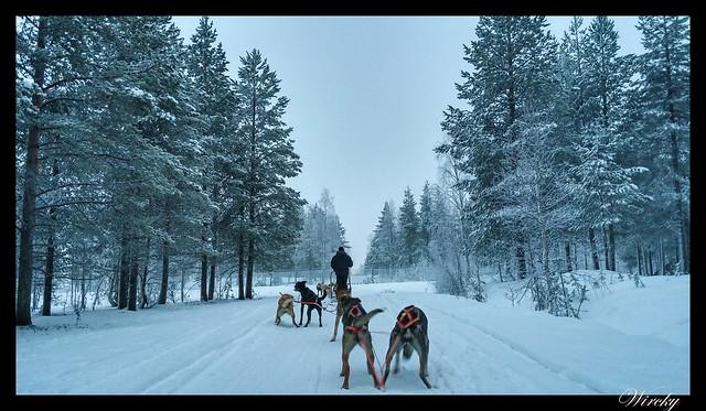 Laponia huskys Rovaniemi aurora boreal - Paseo en huskies