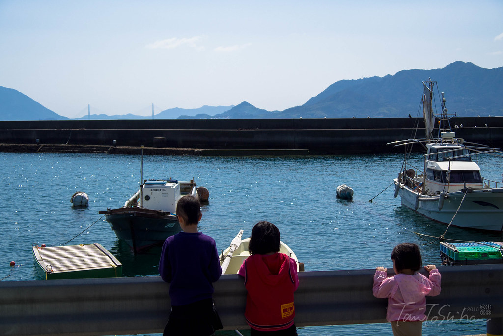 うさぎ島 (大久野島) Rabbit Island