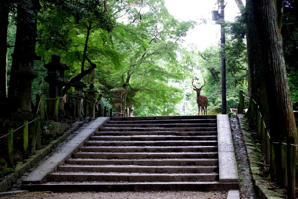 Nara Park_16