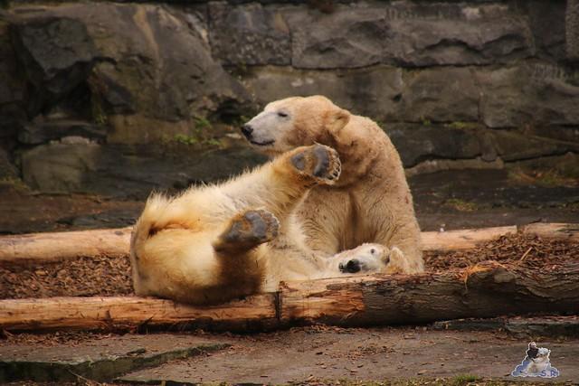 Tierpark Berlin 25.03.2016  0138