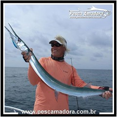 Ian-Arthur com uma bela bicuda.  #pescaamadora #pesqueesolte #baitcast #pescaesportiva #sportfishing #fishing #angler #monsterfish #bigfish #pescaria #pescador #catchandrelease #panama #pescaoceanica #ocean #flyfishing #fish #bassfishing