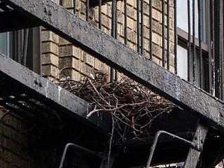 JHW Hawk Nest - 6848