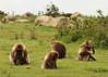 Etiopía: Parque nacional de las Montañas Simien