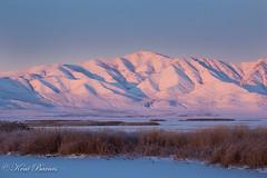Bear River Bird Refuge 31 Dec 2015