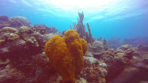Underwaterworld_6