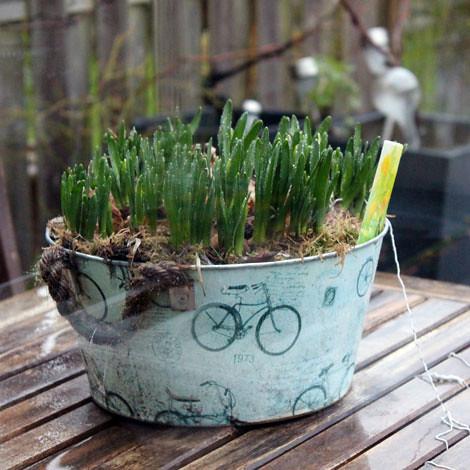 My garden thinks it's spring