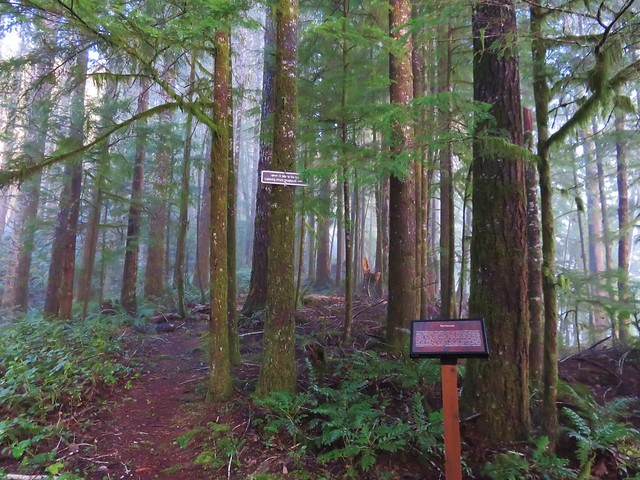 Old Growth Ridge Trail