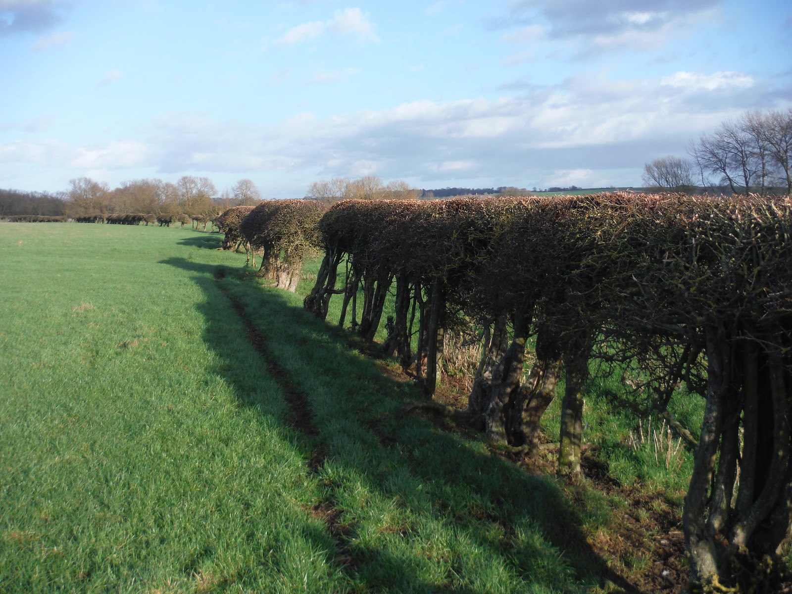 Hedge in Field SWC Walk 191 Haddenham Circular (via Brill)
