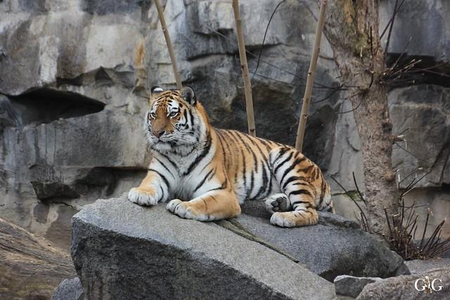 Besuch Tierpark Friedrichsfelde 14.02.201624