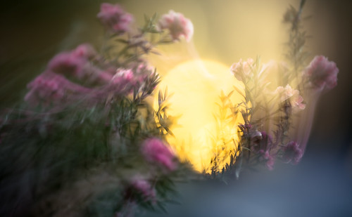 flowers light sunset abstract color nature canon garden eos egg icm intentionalcameramovement canon6d
