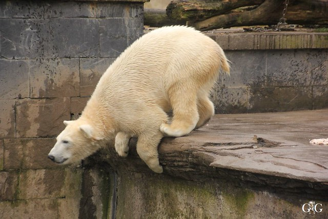 Besuch Zoo Rostock 12.03.201612