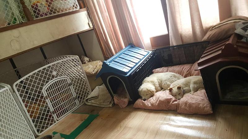Incheon Temporary Shelter