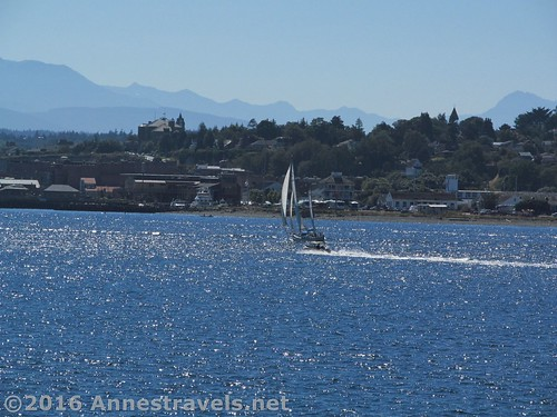 Yet another sailboat... yes, I grew on Arthur Ransom... seen from the Port Townsend Ferry crossing the Puget Sound, Washington