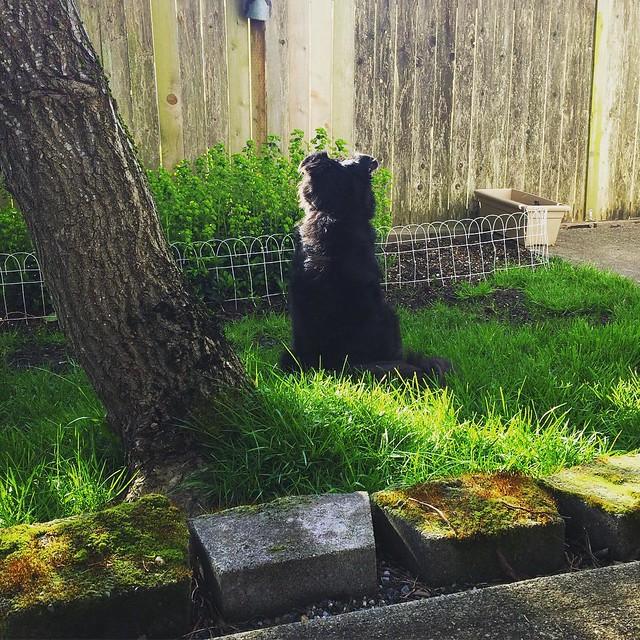 Bear Cub chilling in the backyard. 💚
