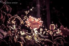 ASA Photography.jpg