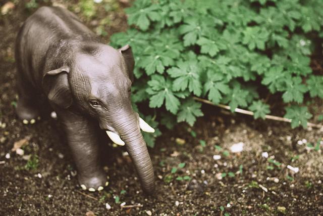 Elefantastisch 93/366