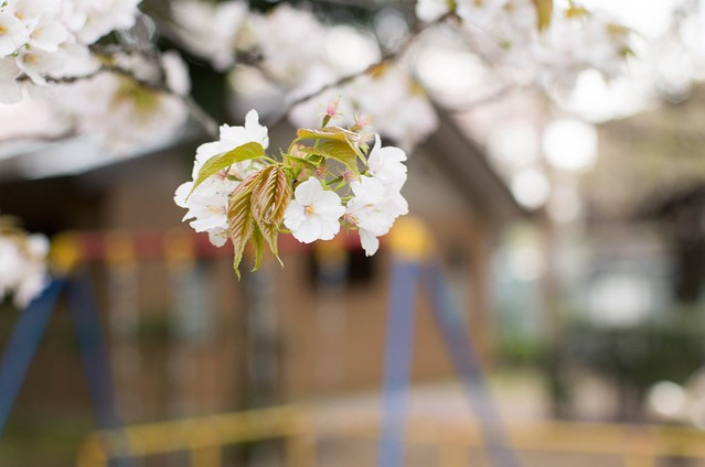 2016/04/09_谷中上野-5