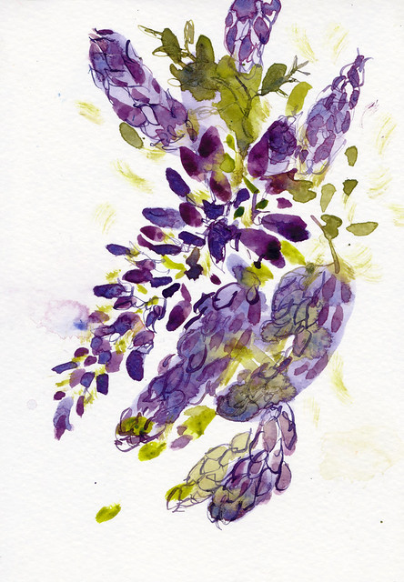 Sketchbook #95: WIsteria