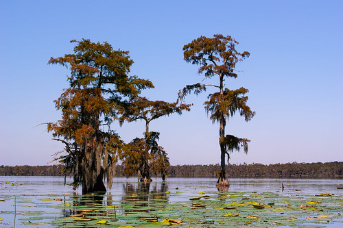 trees usa lake sunrise reeds louisiana atchafalayabasin delta bayou swamp spanishmoss wetlands cypress lakemartin
