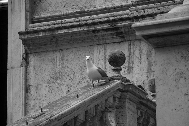 Rome Gabbiano