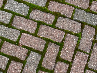 patio moss and bricks