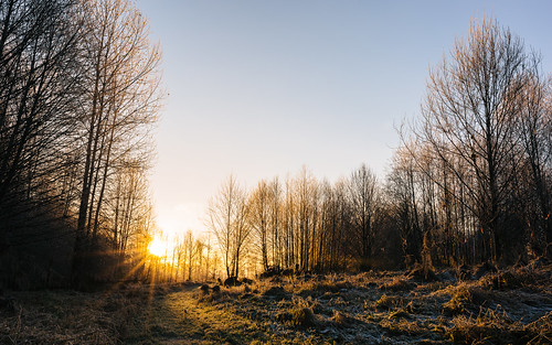 sunrise nature trees path morning carnation chinookbendnaturalarea pacificnorthwest canoneos5dmarkiii sigma35mmf14dghsmart johnwestrock washington