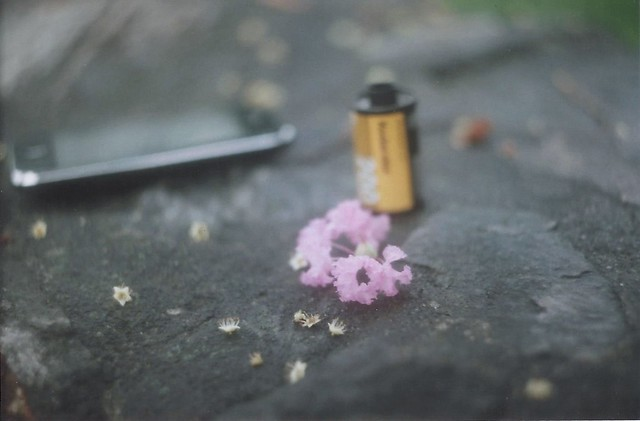 Very small flowers.