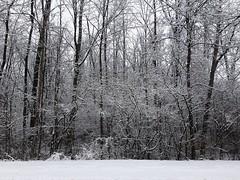 #snow day #pickerington #Ohio #columbusohio