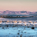 pink dawn, white sands by jody9