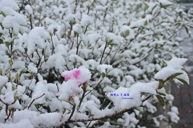 2016-台北陽明山-瑞雪-難得一見的雪白山景-17度C隨拍 (34)
