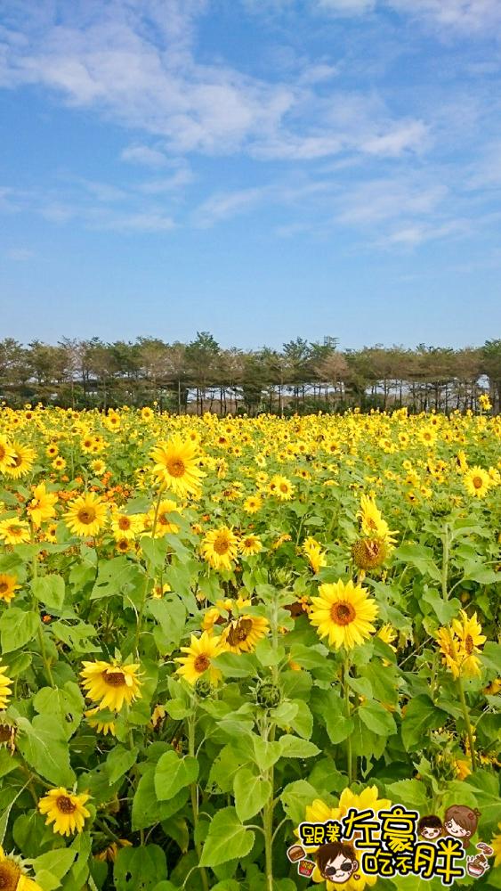 屏東熱帶農業博覽會 _6332